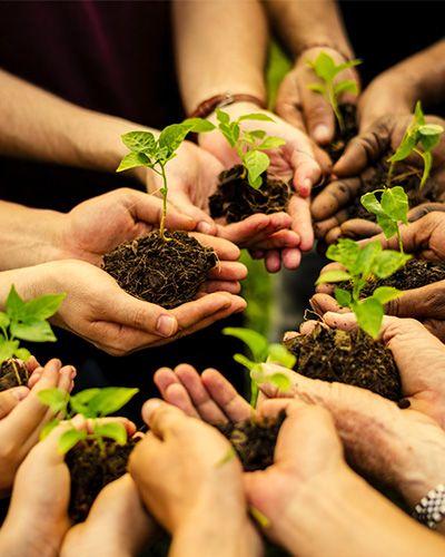 mani unite con piante