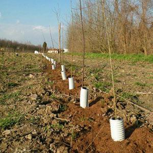 I nuovi alberi piantati
